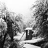 Jardin d'Hiver sur la Cote d'Azur